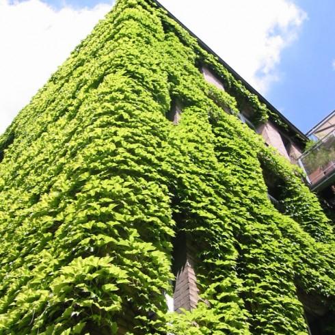 Krug16-Außenfassade